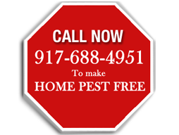 call now exterminator NYC